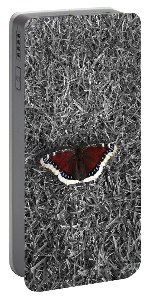 Moth Portable Battery Charger featuring the photograph Wings On Grass by Ron Bissett