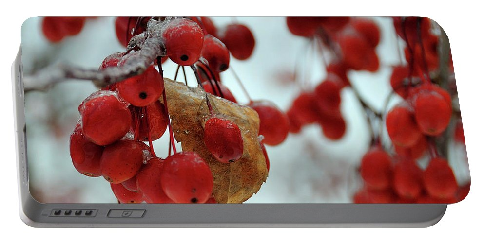 Winter Portable Battery Charger featuring the photograph Winter Berries by David Arment