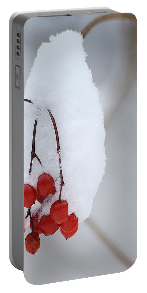 Nature Portable Battery Charger featuring the photograph Winter Berries by Michael Peychich