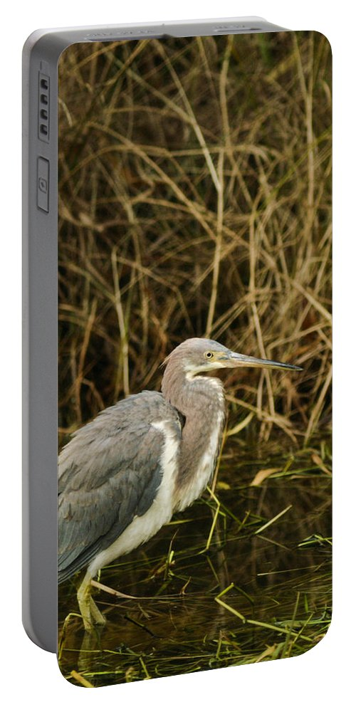 Bird Portable Battery Charger featuring the photograph Winter Coat by Phill Doherty