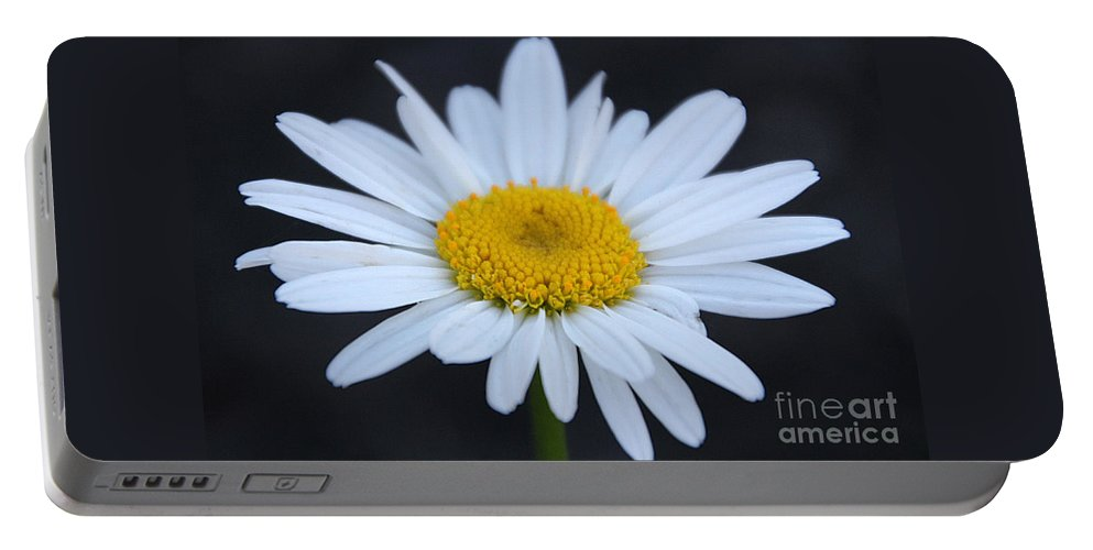 Daisy Portable Battery Charger featuring the photograph Winter Daisy by Amy Steeples
