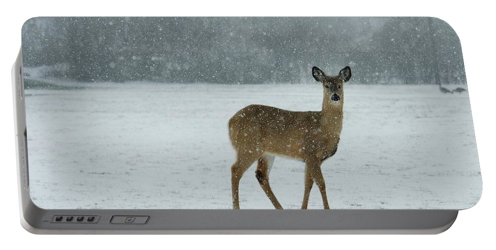 Deer In Snow Portable Battery Charger featuring the photograph Winter Deer Walk by Gothicrow Images