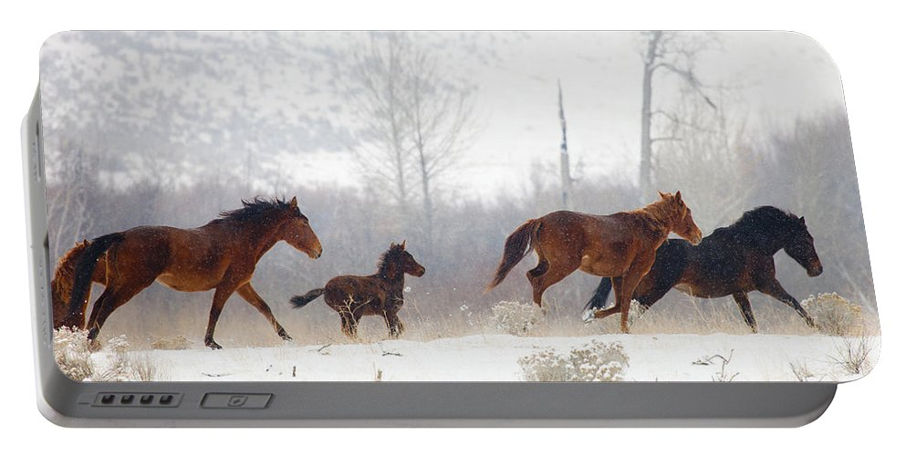 Mustangs Portable Battery Charger featuring the photograph Winter Gallop by Mike Dawson