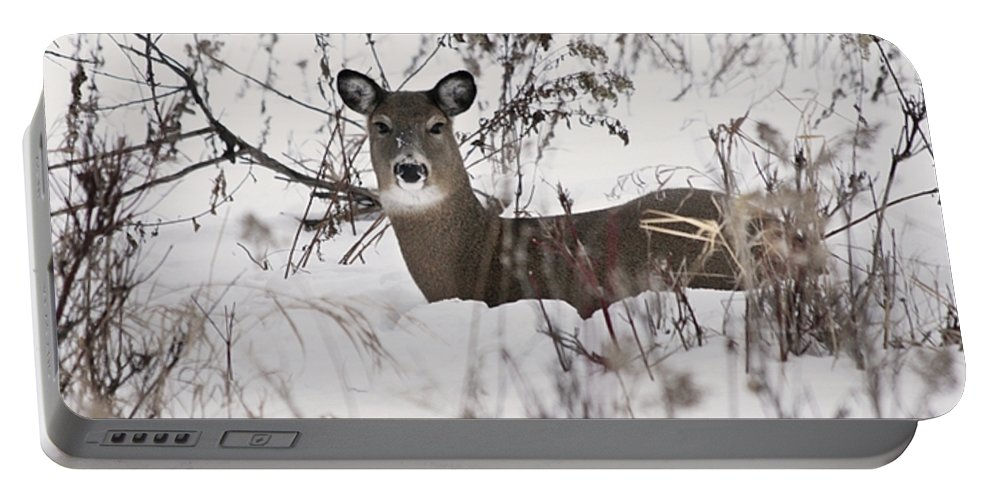 Portable Battery Charger featuring the photograph Winter Slumber by Lori Tordsen