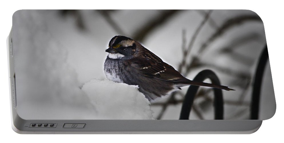 Sparrow Portable Battery Charger featuring the photograph Winter Sparrow by Teresa Mucha