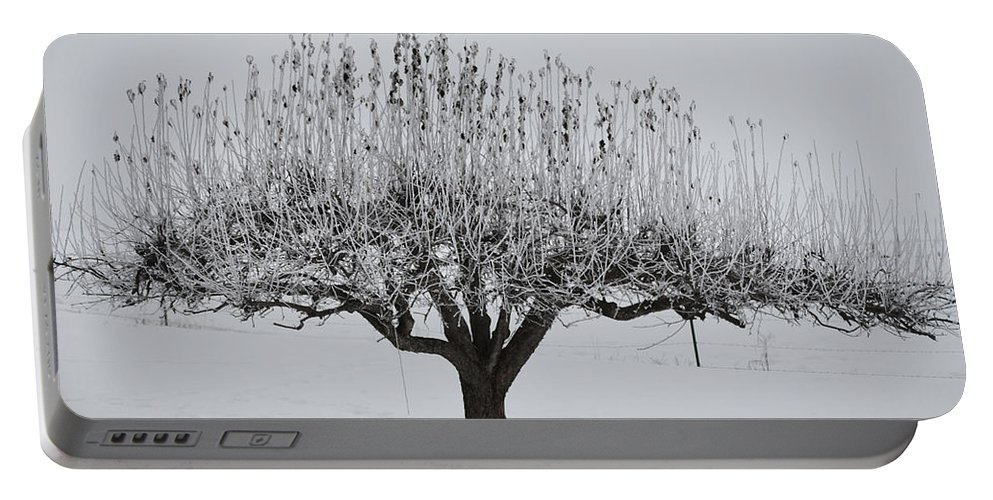 Winter Portable Battery Charger featuring the photograph Winter Tree by Whispering Peaks Photography