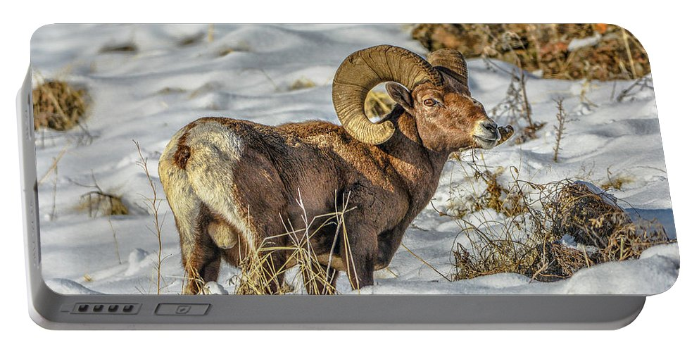 Bighorn Ram Portable Battery Charger featuring the photograph Wintering Bighorn by Jason Brooks
