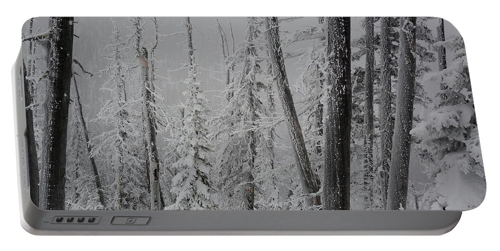 Winterland Portable Battery Charger featuring the photograph Winterland by Whispering Peaks Photography