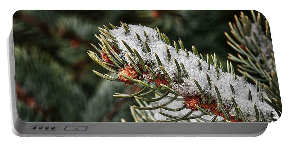 Pine Portable Battery Charger featuring the photograph Winter's Fling by Mitch Spence