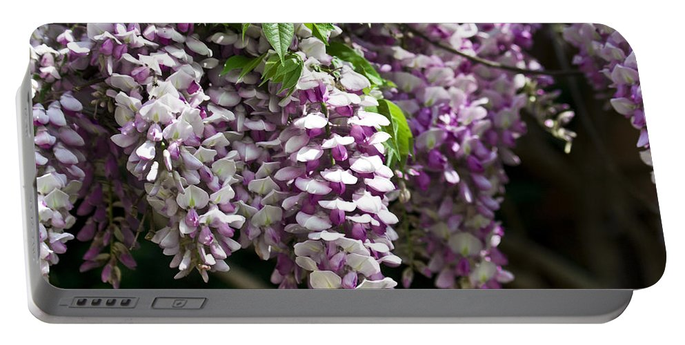 Wisteria Portable Battery Charger featuring the photograph Wisteria by Teresa Mucha