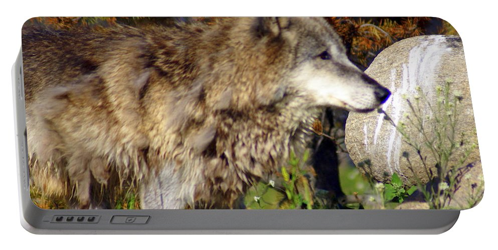 Wolf Portable Battery Charger featuring the photograph Wolf On Patorl by Marty Koch