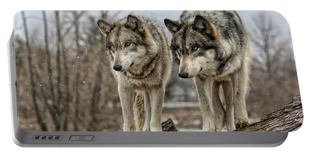 Wolf Wolves Animal Wildlife Mammal Photography Photograph Canis Lupis Grey Timberwolf Portable Battery Charger featuring the photograph Wolf Pair by Shari Jardina