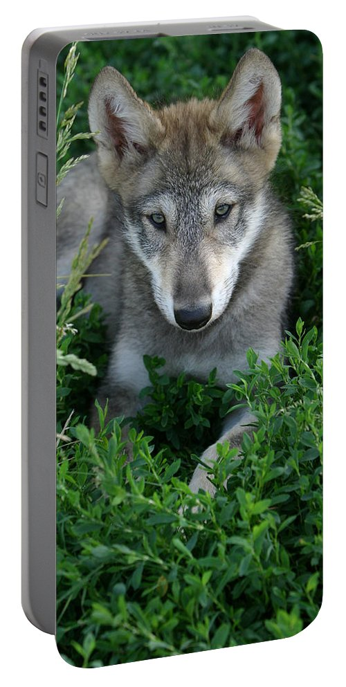 Wolf Wolves Pup Puppy Puppies Canis Lupis Wildlife Wild Animal Gray Timberwolf Photograph Photography Portable Battery Charger featuring the photograph Wolf Pup Portrait by Shari Jardina