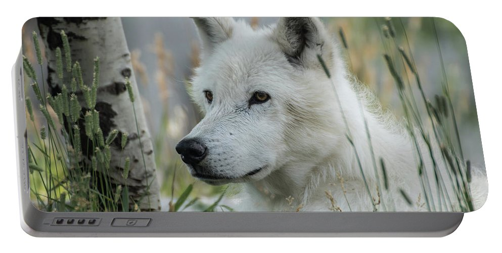 Wolf Portable Battery Charger featuring the photograph Wolf, White by Tom Wagner