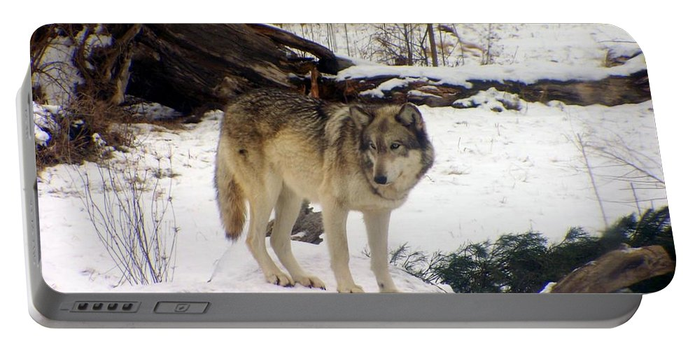 Wolfe Portable Battery Charger featuring the photograph Wolfe In Winter Snow by Charlene Cox