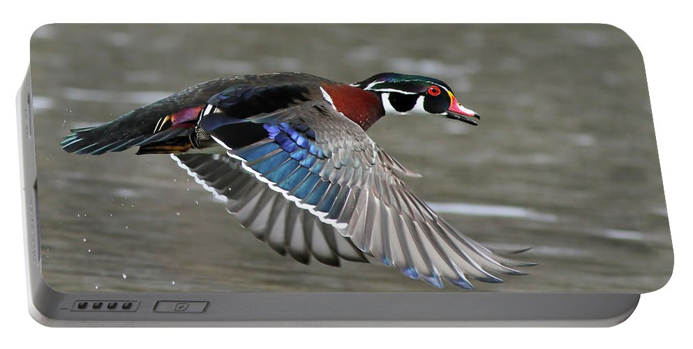 Aix Portable Battery Charger featuring the photograph Wood Duck In Action by Mircea Costina Photography