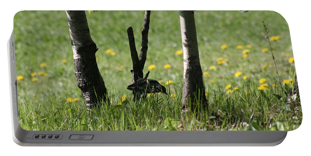 Birds Bird Woodpecker Nature Grass Trees Wildlife Mother Nature Portable Battery Charger featuring the photograph Woodpecker Snack Time by Andrea Lawrence