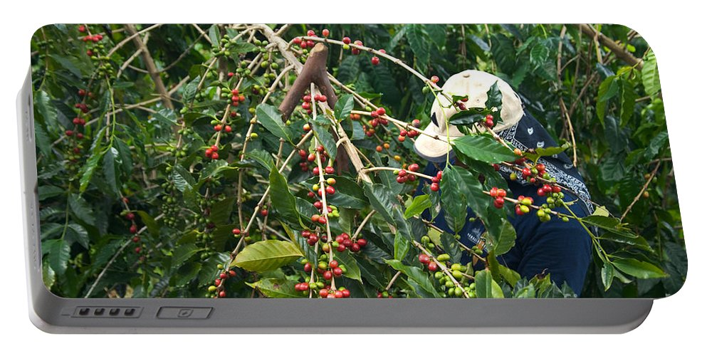 Coffee Portable Battery Charger featuring the photograph Worker Harvesting Kona Coffee by Inga Spence