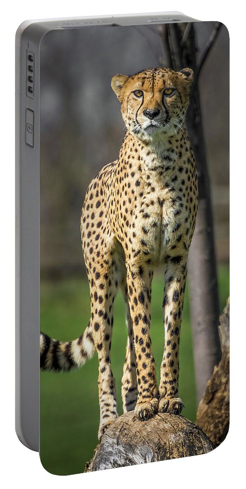 Africa Portable Battery Charger featuring the photograph World's Fastest Land Animal by Ron Pate