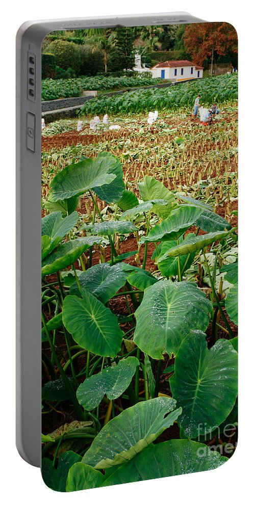 Agriculture Portable Battery Charger featuring the photograph Yams Farm In Azores by Gaspar Avila