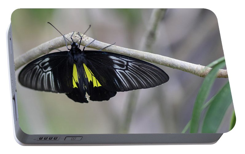 Butterfly Portable Battery Charger featuring the photograph Yellow And Black Butterfly by Raphael Lopez