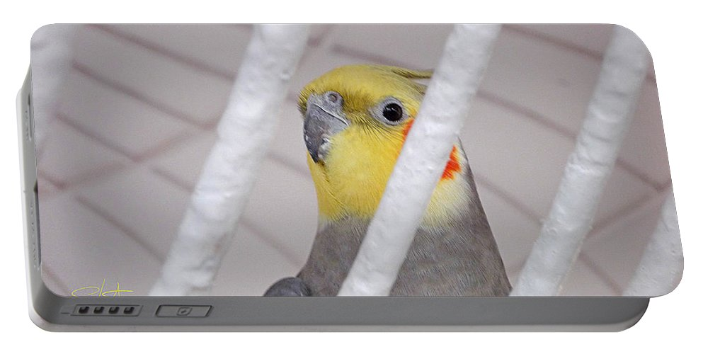 Birds Portable Battery Charger featuring the photograph Yellow And Red On White by Charles Stuart