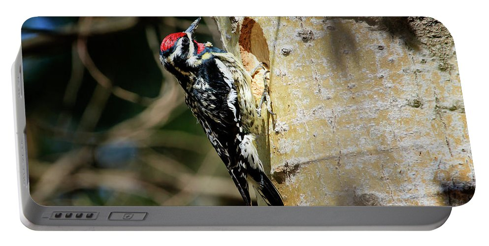 Gary Hall Portable Battery Charger featuring the photograph Yellow-bellied Sapsucker 2 by Gary Hall
