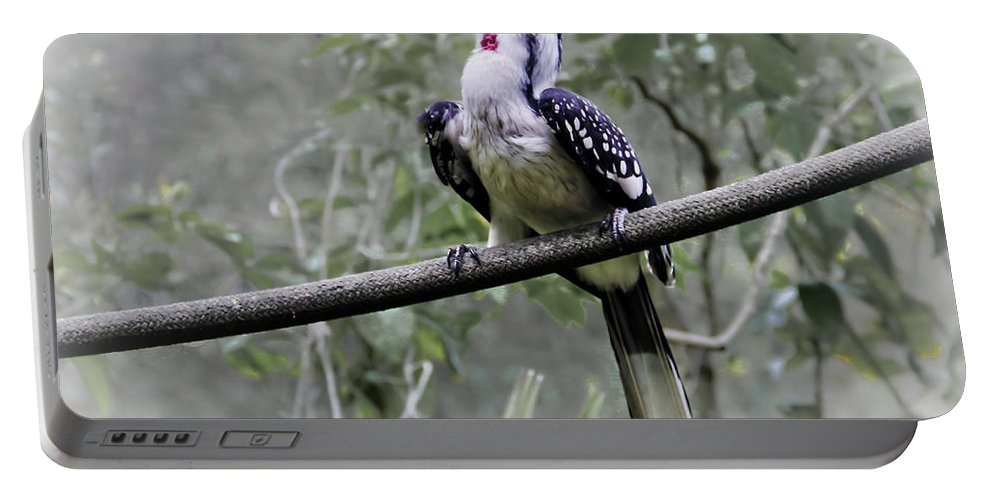 Brevard Zoo Portable Battery Charger featuring the photograph Yellow Billed Hornbill by Roger Wedegis