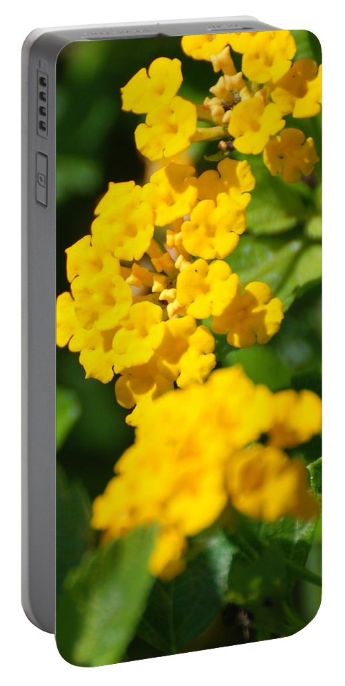 Flowers Portable Battery Charger featuring the photograph Yellow Blooms by Rob Hans