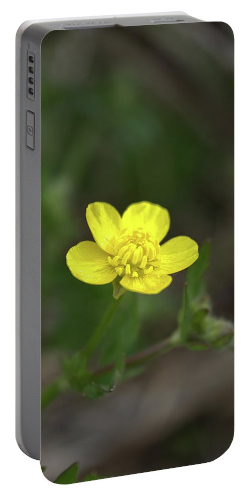 Ranunculus Portable Battery Charger featuring the photograph Yellow Buttercup by FineArtRoyal Joshua Mimbs