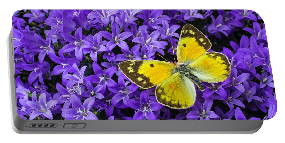 Campanula Get Mee Portable Battery Charger featuring the photograph Yellow Butterfly On Mee by Garry Gay