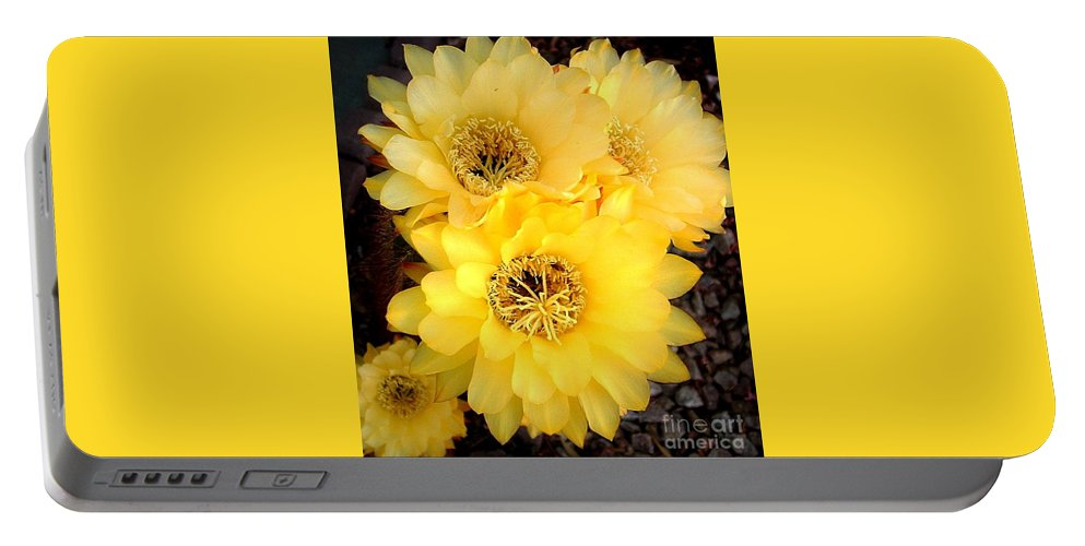 Yellow Cactus Portable Battery Charger featuring the photograph Yellow Cereus by Marilyn Smith