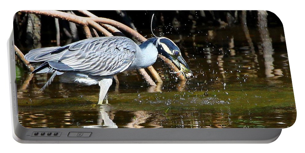 Yellow-crowned Night Heron Portable Battery Charger featuring the photograph Yellow Crowned Night Heron Catches A Crab by Barbara Bowen