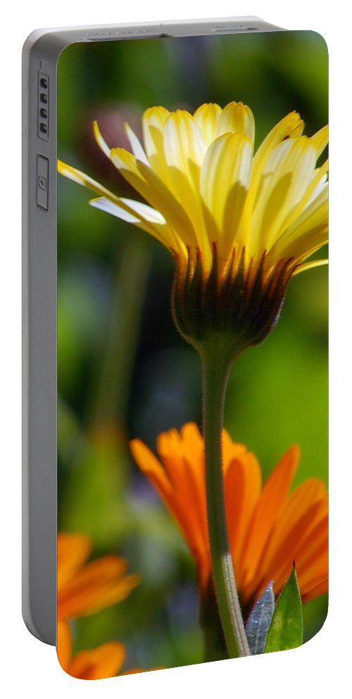 Daisy Portable Battery Charger featuring the photograph Yellow Daisy by Amy Fose