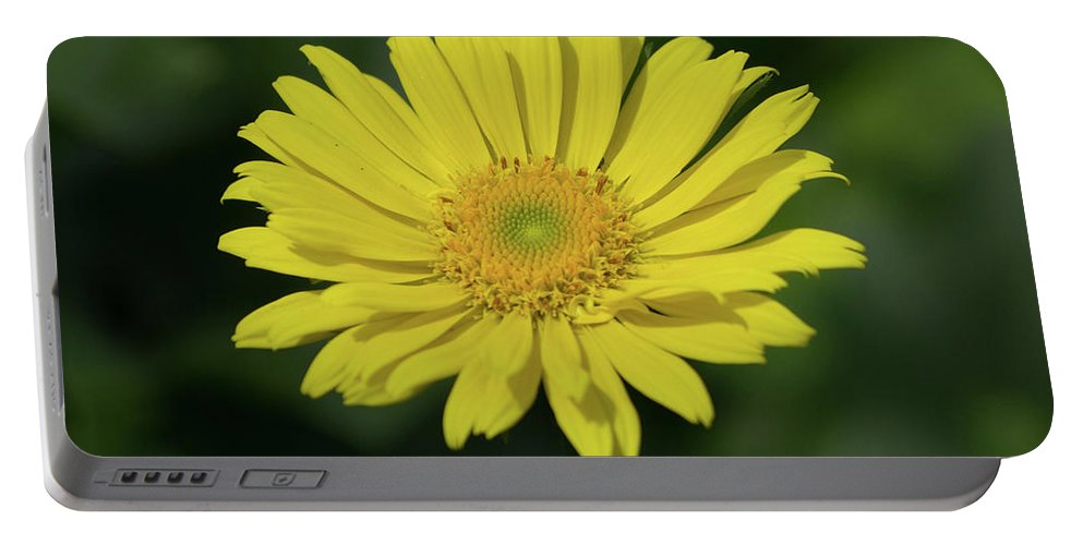 Daisy Portable Battery Charger featuring the photograph Yellow Daisy by Stephen Martin