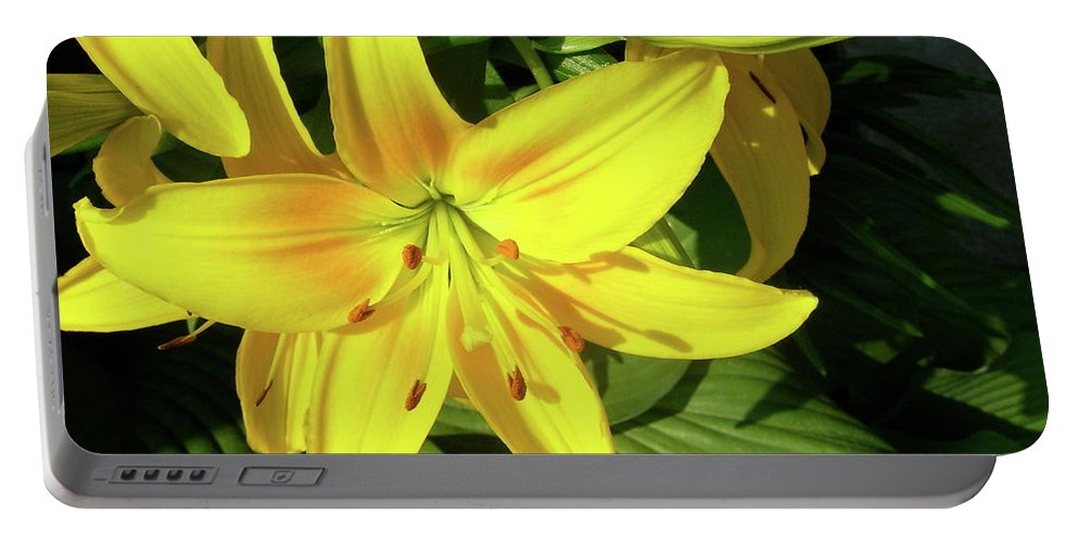 Day Lily Portable Battery Charger featuring the photograph Yellow Day Lilies by Michael Peychich