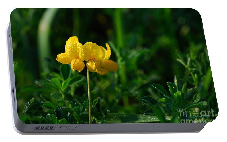 Birds Foot Trefoil Portable Battery Charger featuring the photograph Yellow Dew Drops by Michelle Hastings