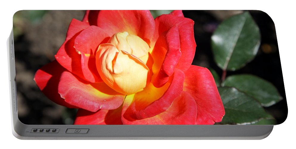 Rose Portable Battery Charger featuring the photograph Yellow Heart Rose by Christiane Schulze Art And Photography