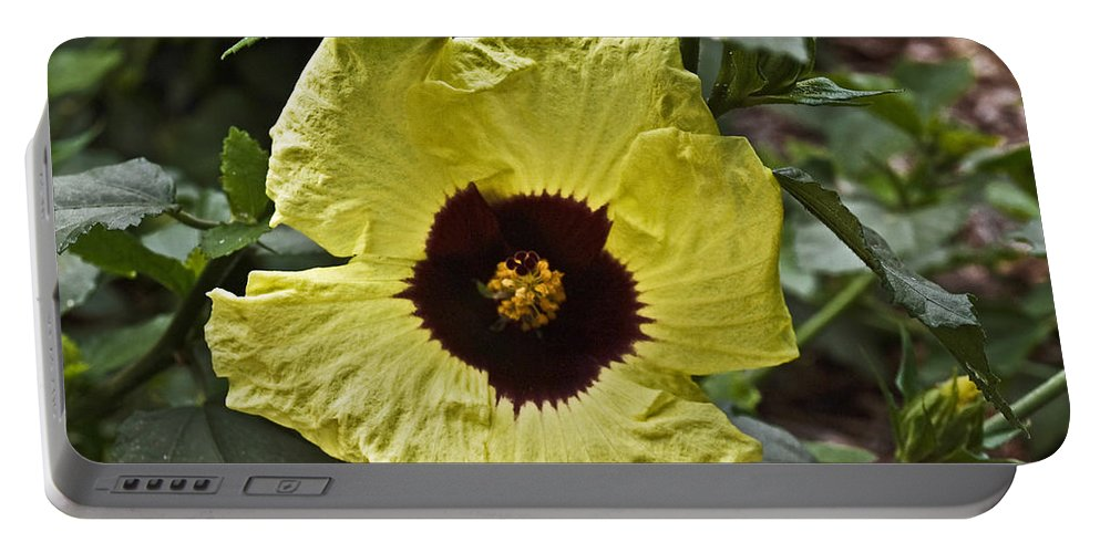 Yellow Flower Portable Battery Charger featuring the photograph Yellow Hibiscus F134 by Howard Stapleton