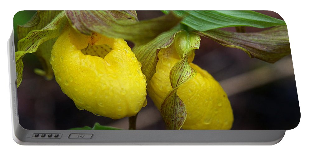 Beautiful Portable Battery Charger featuring the photograph Yellow Lady's Slipper by Jack R Perry