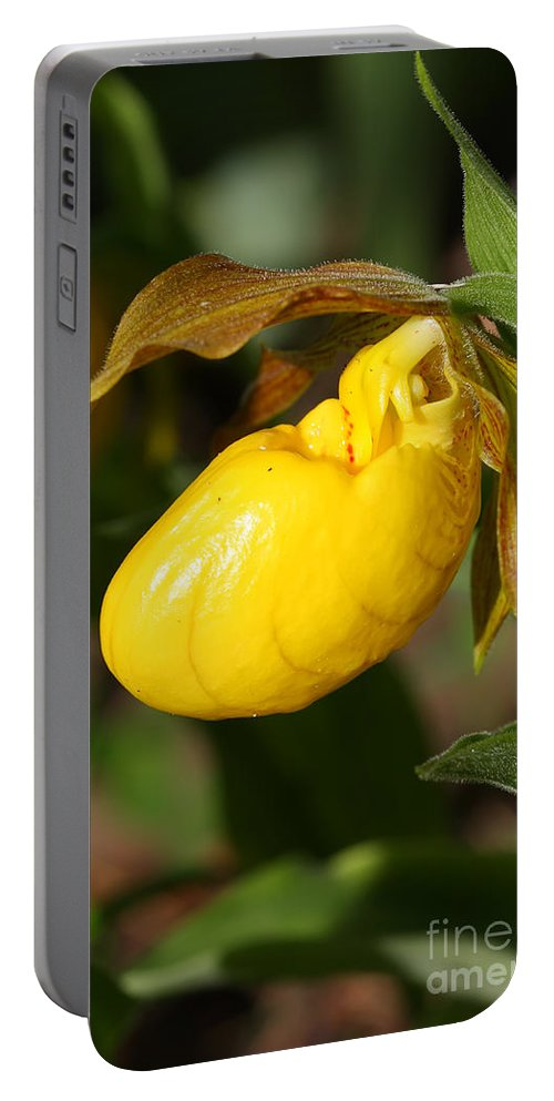 Flower Portable Battery Charger featuring the photograph Yellow Lady's Slipper by Teresa Zieba