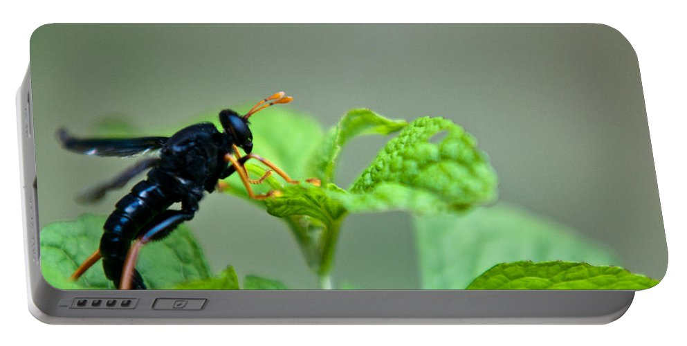 Wasp Portable Battery Charger featuring the photograph Yellow Leggings by Douglas Barnett