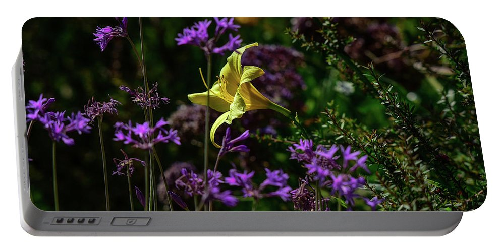 Linda Brody Portable Battery Charger featuring the photograph Yellow Lily Amongst Purple I by Linda Brody