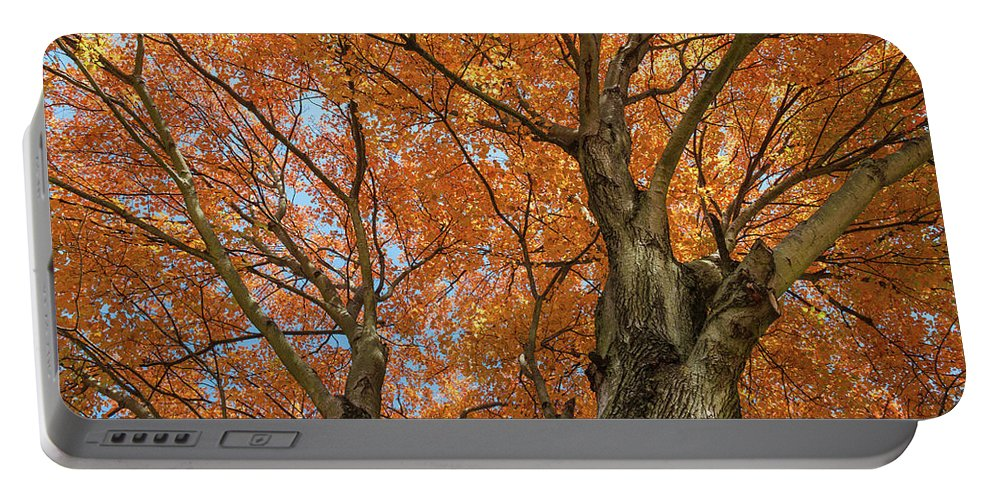 Autumn Portable Battery Charger featuring the photograph Yellow Maple Tree by Bryan Pollard