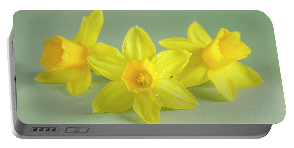 Yellow Mini Narcissus Portable Battery Charger featuring the photograph Yellow Mini Narcissus On Green 2 by Iris Richardson