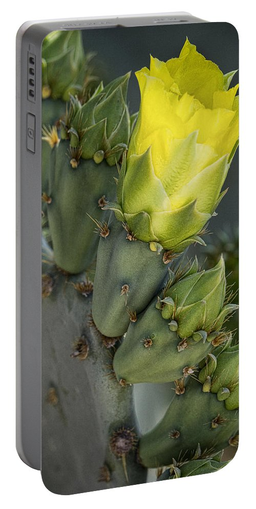 Golden Prickly Pear Cactus Portable Battery Charger featuring the photograph Yellow Prickly Pear Cactus Bloom by Saija Lehtonen