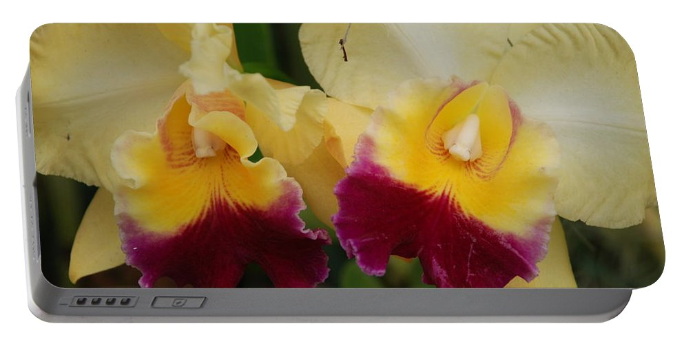 Macro Portable Battery Charger featuring the photograph Yellow Purple Orchids by Rob Hans