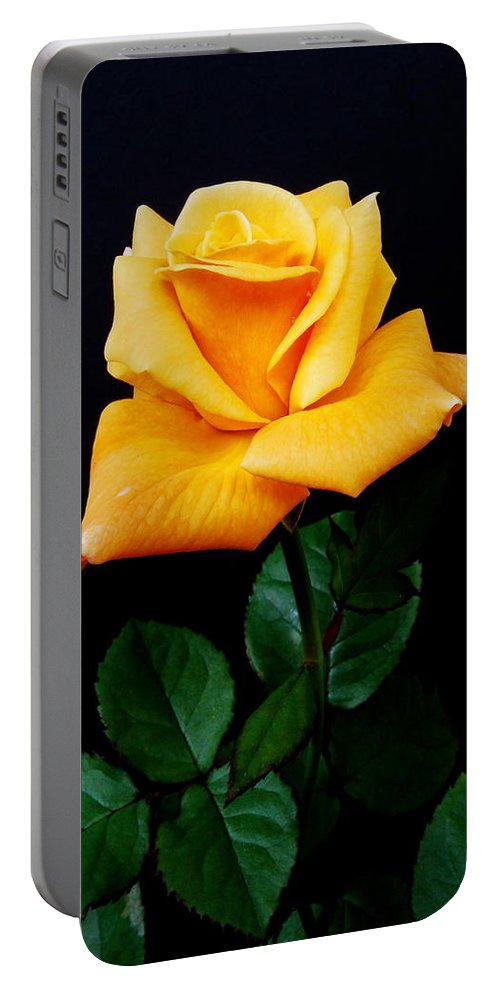 Flower Portable Battery Charger featuring the photograph Yellow Rose by Michael Peychich