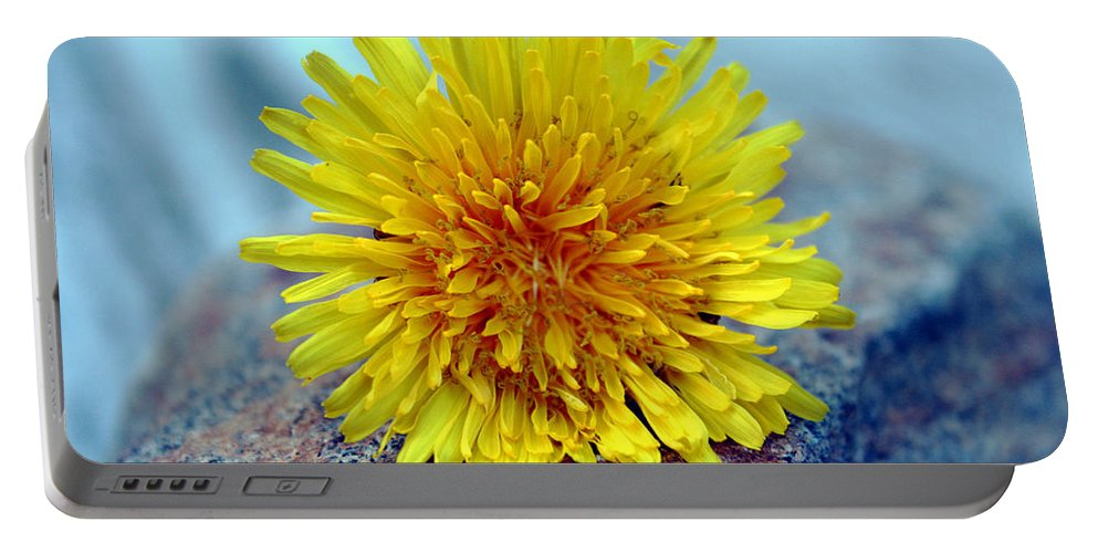 Flower Wild Nature Yellow Rock Blue Spring Macro Close Up Portable Battery Charger featuring the photograph Yellow Spring by Linda Sannuti