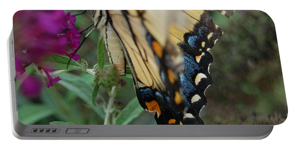 Butterfly. Yellow Portable Battery Charger featuring the photograph Yellow Swallow by Robert Meanor